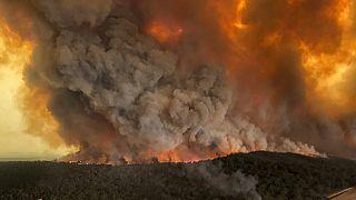 Szörnyű felvételek az ausztrál tűzben elpusztult többezernyi állatról