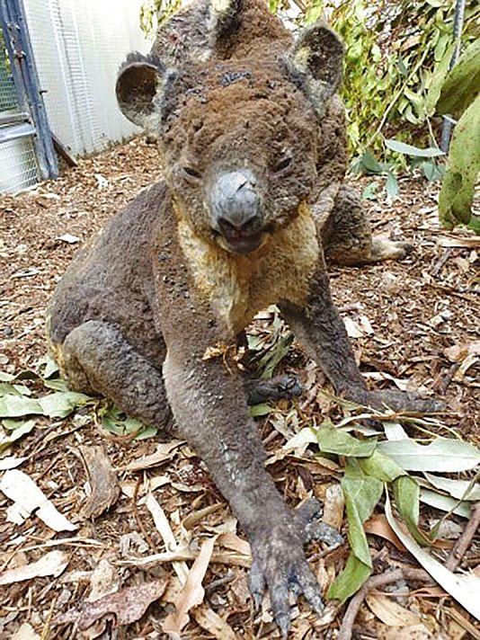Dana Mitchell/Kangaroo Island Wildlife Park vía AP