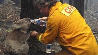 Australianos protestam contra a forma como o Governo tem gerido os fogos