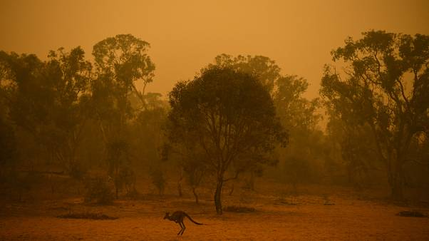 Enyhültek a bozóttüzek, de újabb hőhullám jön Ausztráliában