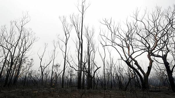 Geschwärzte Bäume nach einem Flächenbrand in der Nähe des Kangaroo Valley, Australien, Sonntag, 5. Januar 2020