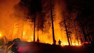 Kaliforniya'da çıkan orman yangınları aylardır devam ediyor