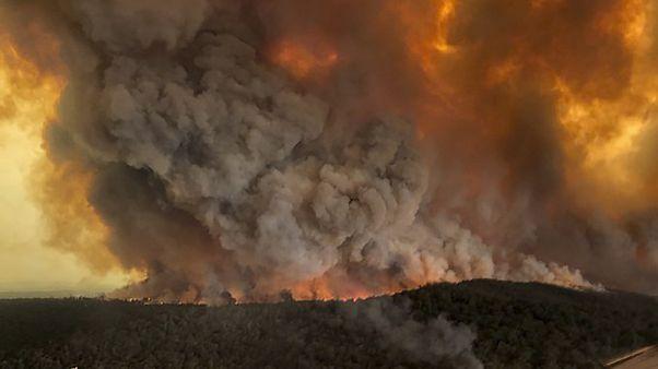 Az ausztrál tüzek borzalma számokban
