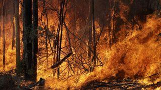 Avustralya'daki orman yangınlarından bir kare