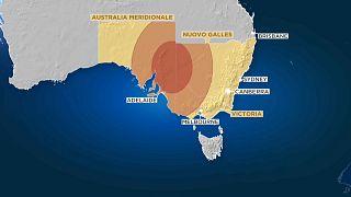 Gli animali sono le prime vittime degli incendi australiani