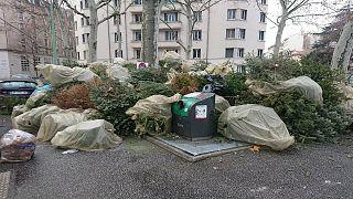 Noel dekorasyonu olarak kullanılan çam ağaçları çöpe atılıyor