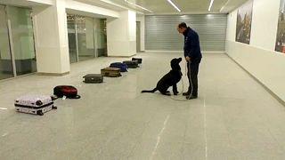 Új technológia segíti a robbanószerkereső-kutyák kiképzését