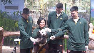 شاهد: حديقة حيوانات في الصين تحتفل بذكرى مئة يوم على ولادة باندا عملاق