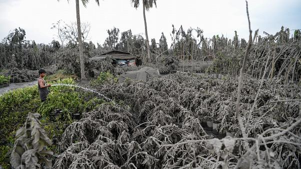 A worker hoses down plants covered with mud and ash after Taal volcano erupted, in Talisay town, Batangas province south of Manila on 13 January 2020.