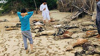 بیش از ۴۰۰ روستای سیستان و بلوچستان در محاصره سیلاب؛ هشدار درباره حمله گاندوها