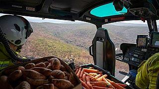 Repülőgépről etetik az erdőtüzet túlélő állatokat Ausztráliában