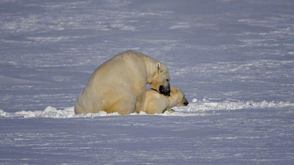 Норвегия будет регулировать туризм в Арктике