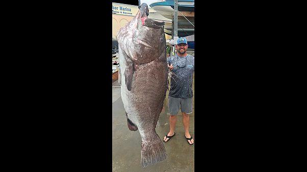 Größer als ein Mann und 158 Kilo schwer: Riesenfisch in Florida