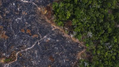 A burned area of the Amazon rainforest is seen in Prainha, Para state, Brazil after widespread fires in 2019.