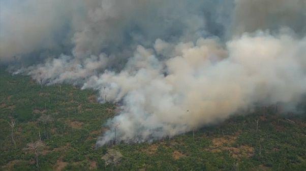 Großflächiger Waldbrand im Amazonas