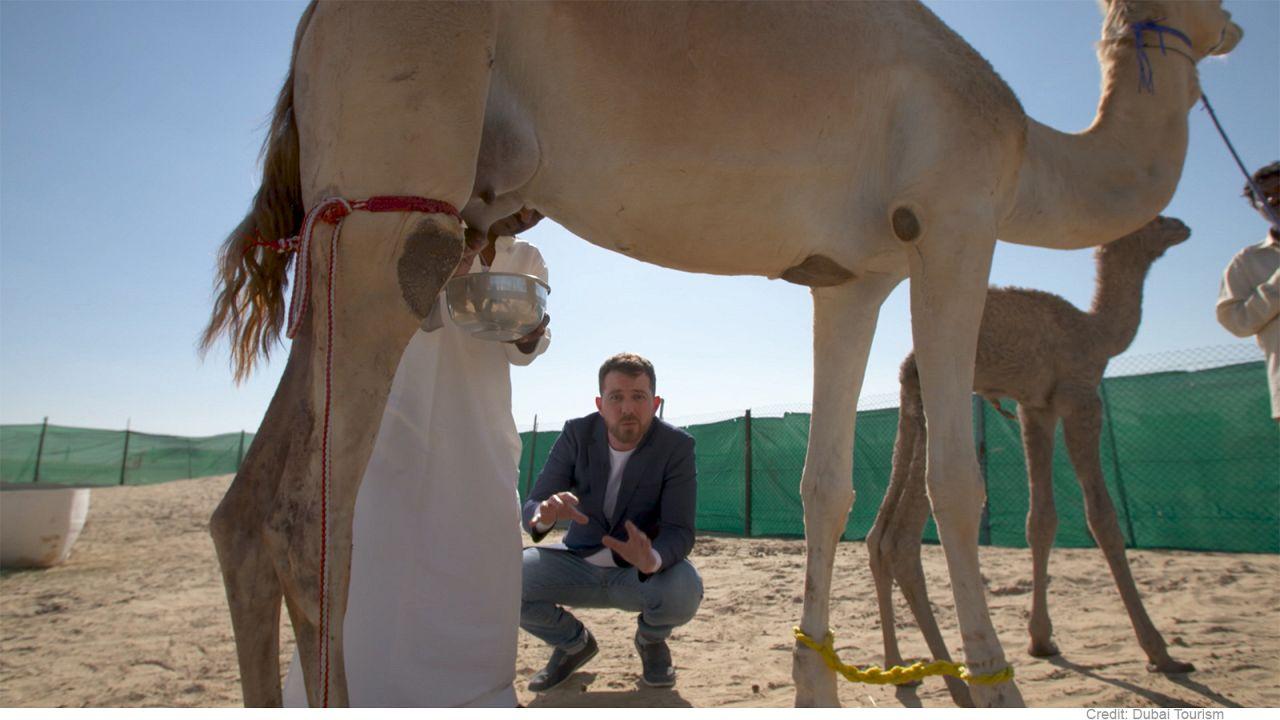Дубай: верблюжье молоко покоряет сладкоежек