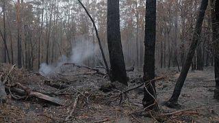 Chuva de alívio numa Austrália a arder