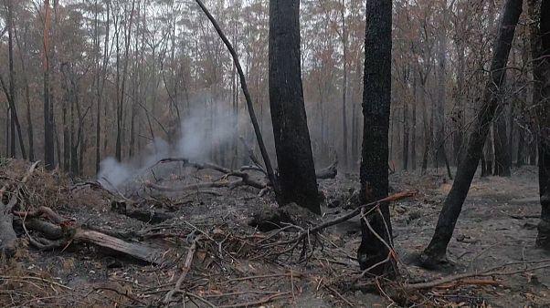 شاهد: هطول أمطار على أجزاء من أستراليا يساهم في احتواء الحرائق