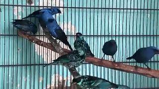 A madarak a limai állatkertbe kerültek