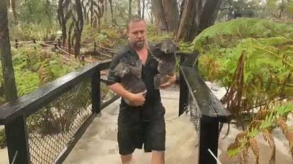 Tűz után árvíz Ausztráliában