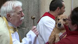 Believers and Retrievers: pets taken to church for special blessings in Madrid