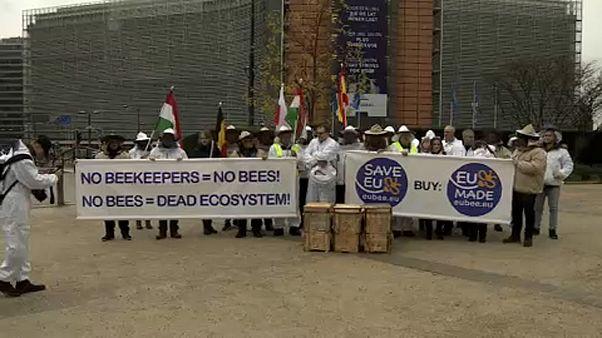 Apicultores europeus manifestam-se em Bruxelas