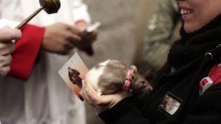 مباركة الحيوانات بمناسبة الاحتفال بعيد القديس أنتوني