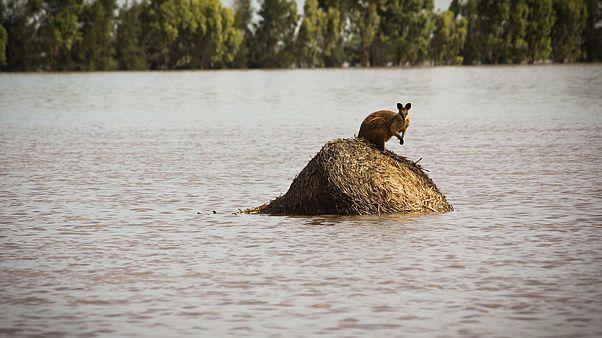 Ausztrália: tűz- után árvízveszély