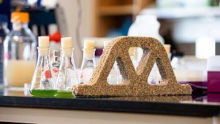 Colorado Üniversitesi'nde görev yapan bilim insanları kum ve bakterilerden kendi kendini tamir edebilen canlı tuğla üretti