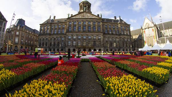In pictures: Bright colours in Amsterdam in celebration of National Tulip Day