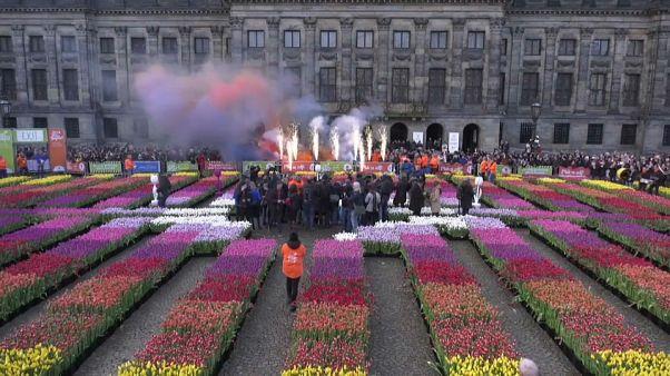 روز ملی لاله در هلند