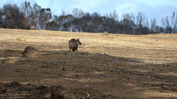 L'ïle Kangourou dévastée, le 15 janvier 2020.