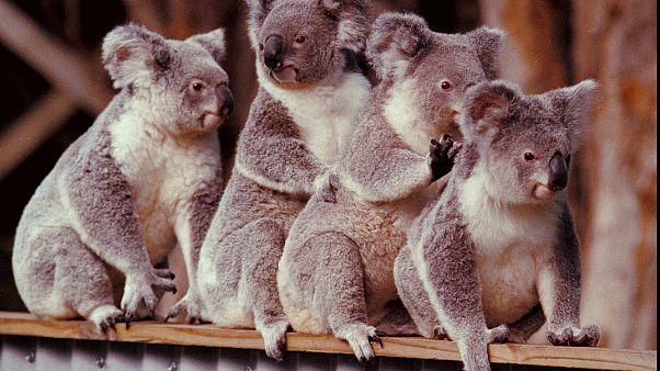 Австралия рассчитывает на туристов
