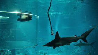 شاهد:اكتشاف أسماك قرش جديدة يمكنها المشي