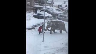 Приключения итальянских слонов в России