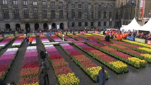 گلچین ویدئوهای هفته؛ از تزئین میدان با گل لاله تا هجوم ملخها