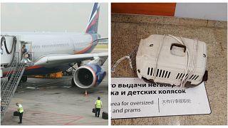 """Две кошки пассажира """"Аэрофлота"""" погибли при транспортировке в Шереметьеве"""