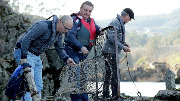 Varios pescadores capturan peces en una de las pesqueiras del río Miño.