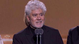 Siete premios sin dolor para gloria de Almodóvar, el cineasta español triunfa en la gala de los Goya