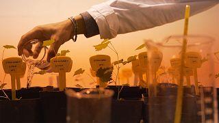Ученые ЕС пустят виноградный жмых в дело