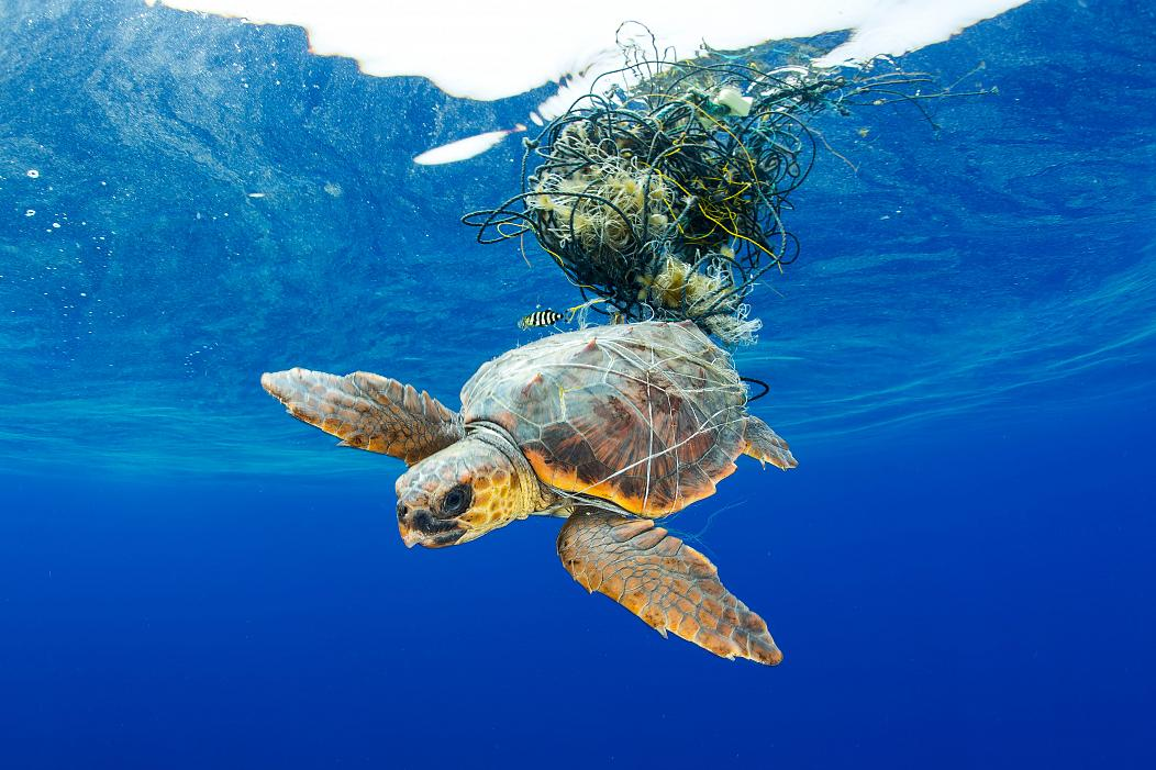 Bilderesultater for turtles plastic