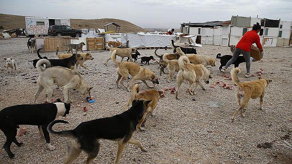 Ankara'da 16 köpeği zehirleyen 3 kişiye 10'ar yıl hapis cezası