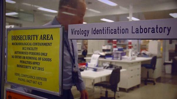 Investigadores lutam contra o coronavírus