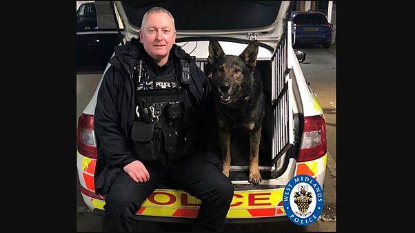 Police dog Odin saved the day