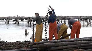 Los grandes perjudicados por la borrasca Gloria en el Delta del Ebro