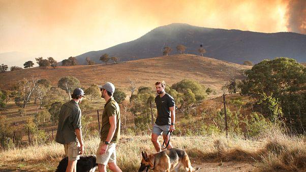الحرائق في أستراليا مستمرة والسلطات تعلن حالة الطوارئ