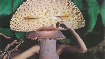 What can magic mushrooms teach us about preserving nature?