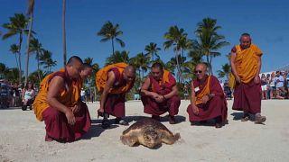 Mönche lassen Schildkröte frei