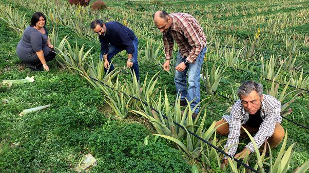 28η Agrotica: Κλιματική αλλαγή και γεωργία