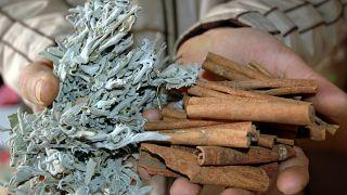 Tedavi için kullanılan bitkiler